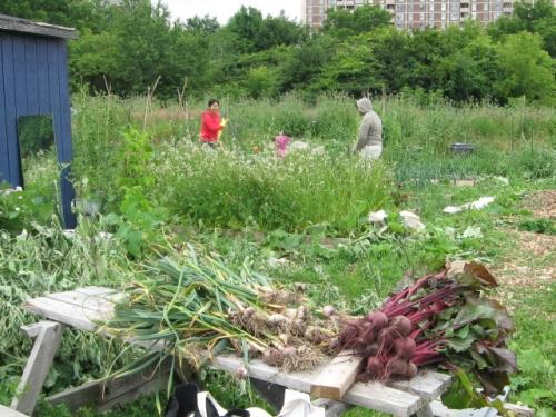 gardenworkjuly1509 007